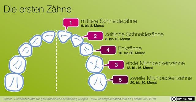 welche-zähne-kommen-zuerst-infografik